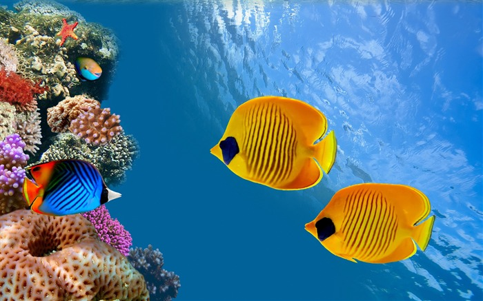 Fish ocean underwater-Animal Photos HD Wallpaper Views:1415