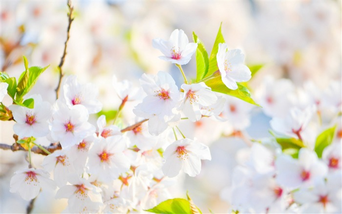 Flowers spring bloom-Flowers photography wallpaper Views:2219