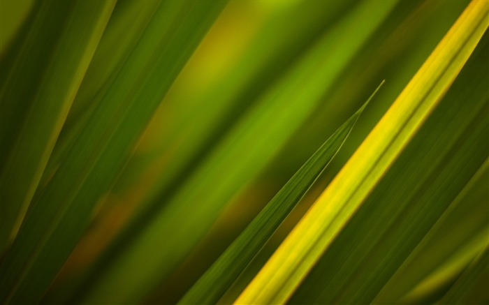 Grass leaves plant close-up-2016 Macro Photo Wallpaper Views:2421 Date:8/1/2016 9:38:27 AM