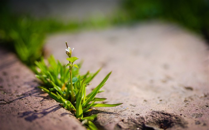 Plant sprout green-Macro photography wallpaper Views:655