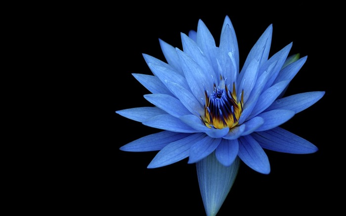 Sony xperia z stock blue flower-Flowers photography wallpaper Views:1657