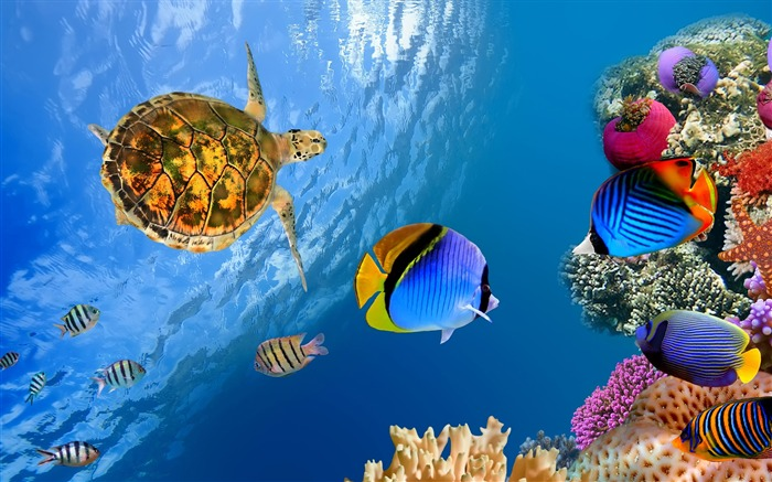 Underwater ocean landscape-Animal Photos HD Wallpaper Views:882