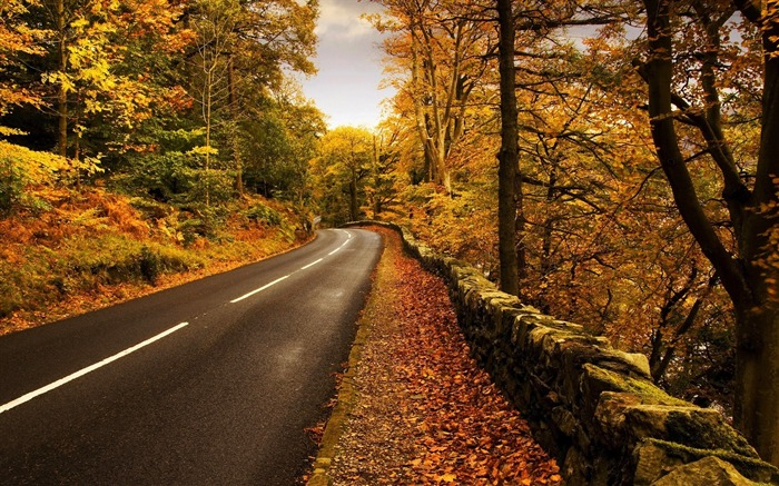 Autumn forest leaves road-2016 Scenery HD Wallpaper Views:1446