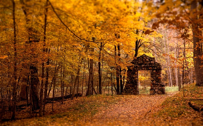 2016 Autumn Forest Nature Scenery HD Wallpaper Views:16888