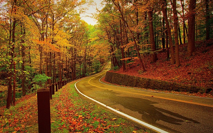 Autumn forest road turn-2016 Scenery HD Wallpaper Views:2467