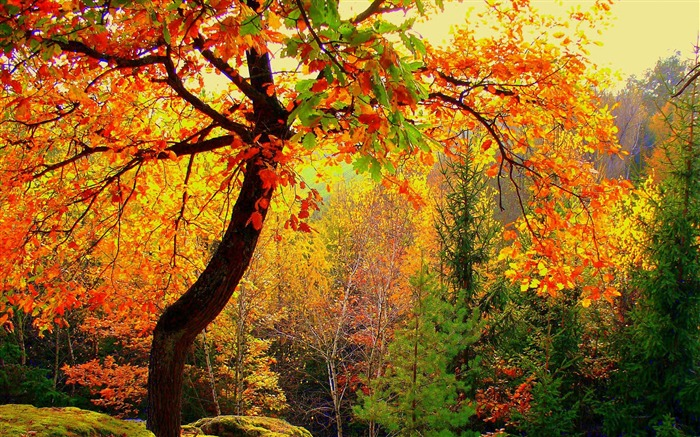 Autumn forest trees-2016 Scenery HD Wallpaper Views:2161