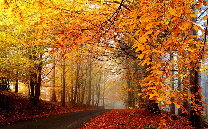 Autumn leaves trees road fog-2016 Scenery HD Wallpaper Views:2147