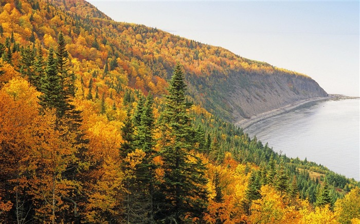 Forest Coast Resources Autumn-Nature High Quality Wallpaper Views:2124 Date:9/21/2016 8:19:11 AM