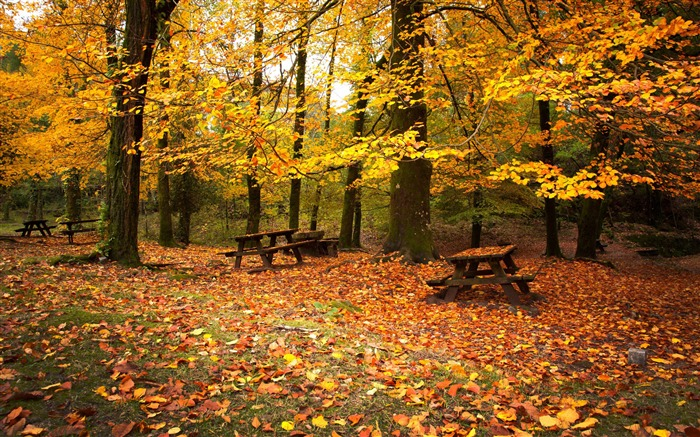 Leaf fall autumn benches-2016 Scenery HD Wallpaper Views:2699