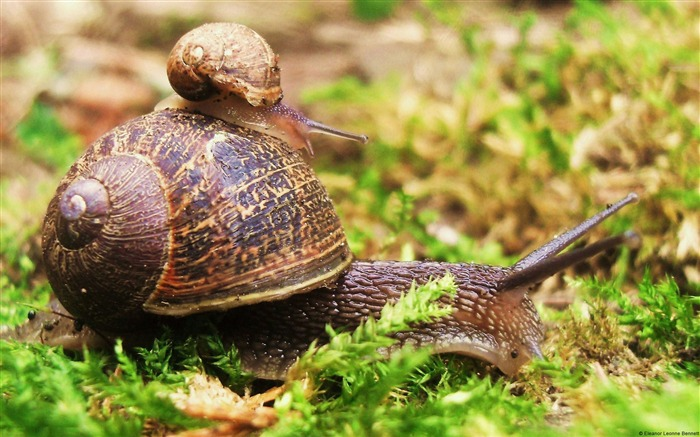 Snail share a lift home-Animal High Quality Wallpaper Views:1749
