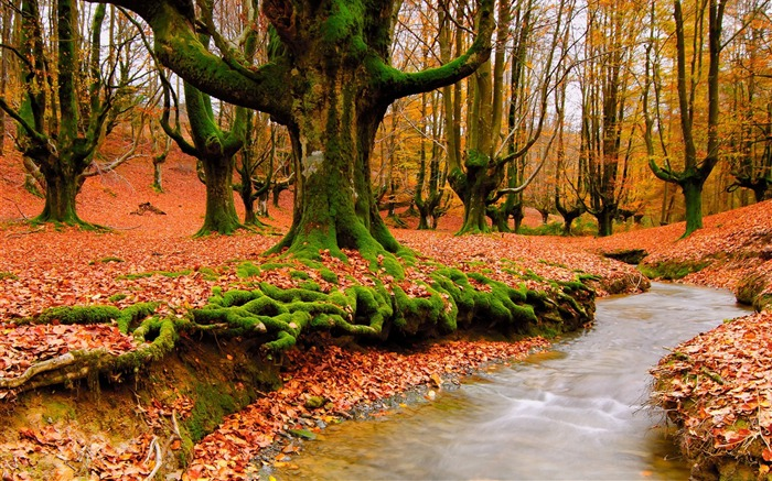 Trees river autumn moss-2016 Scenery HD Wallpaper Views:1336
