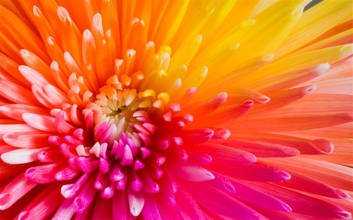 Colourful flowers macro-2016 High Quality HD Wallpaper Views:1503