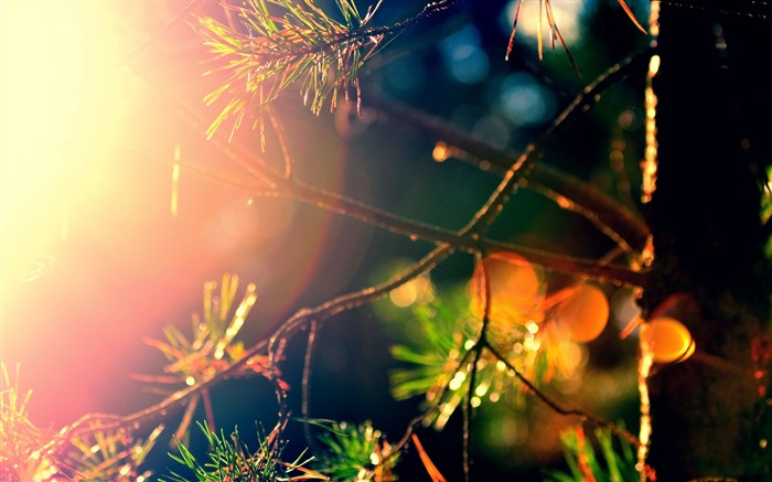 Leaves sunlight macro branches-Bokeh Photography Wallpaper Views:1715
