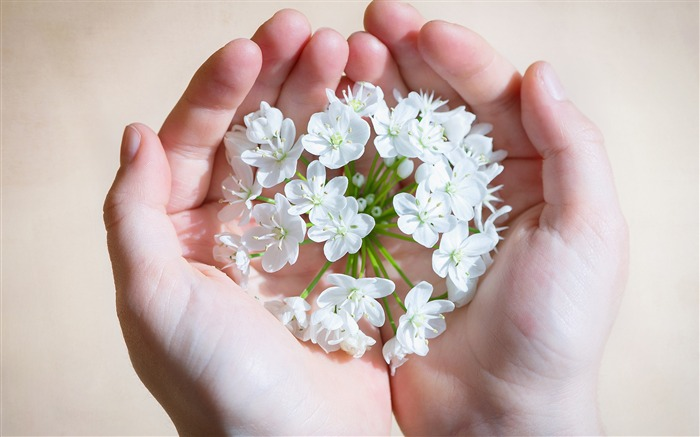 White flowers in womens hands-Fresh Nature HD Wallpaper Views:545