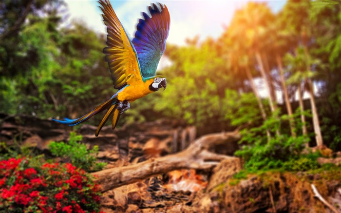 Yellow blue parrot flying-Animal High Quality Wallpaper Views:1773
