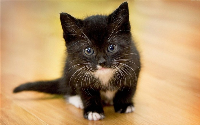 Kitten face spotted-Animal High Quality Wallpaper Views:1240