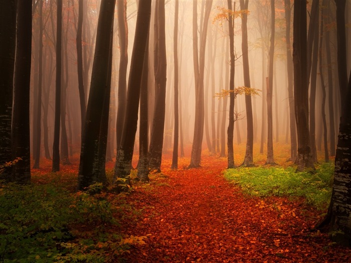 Misty autumn forest-2016 High Quality Wallpaper Views:1865