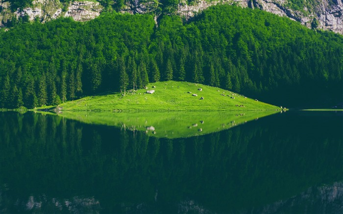 Seealpsee lake switzerland-2016 High Quality Wallpaper Views:1208