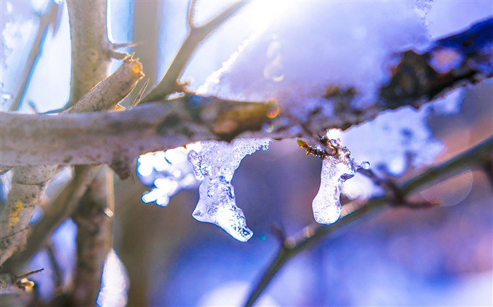 Branch ice winter-2016 High Quality HD Wallpaper Views:1508