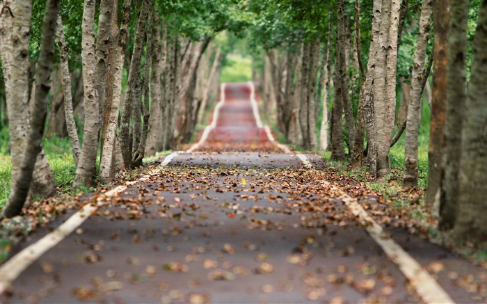 Jungle tree lined road-Nature High Quality HD Wallpaper Views:1393