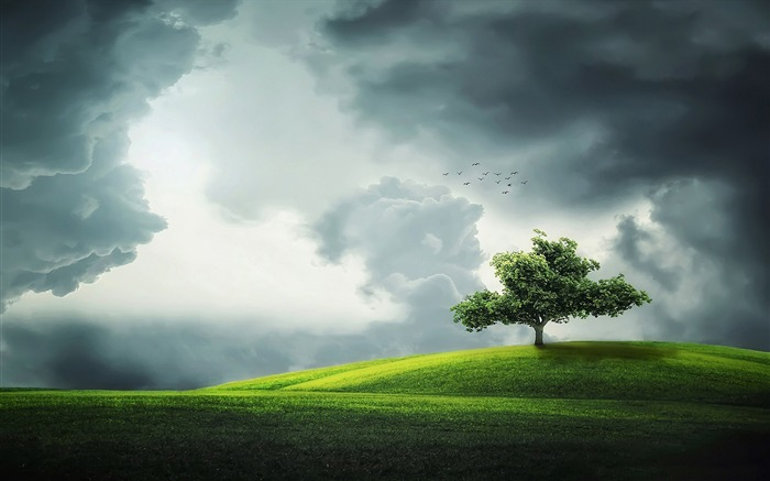 Lone tree on a hill-Nature High Quality HD Wallpaper Views:1797