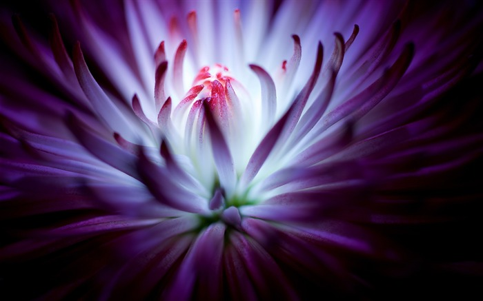 Purple flower-2016 High Quality HD Wallpaper Views:1334