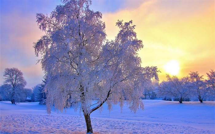 Snow frost tree trees sun-Winter Landscape HD Wallpaper Views:4021 Date:1/17/2017 8:09:12 AM