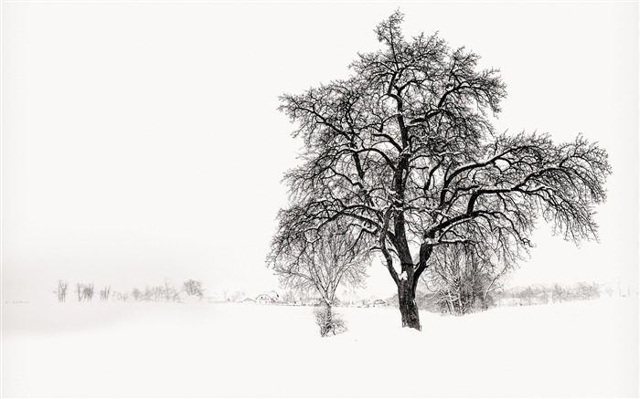 White Snowy Tree-Winter Landscape HD Wallpaper Views:3887 Date:1/17/2017 8:11:52 AM