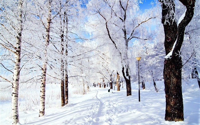 Winter forest snow-Scenery HD Wallpaper Views:1318