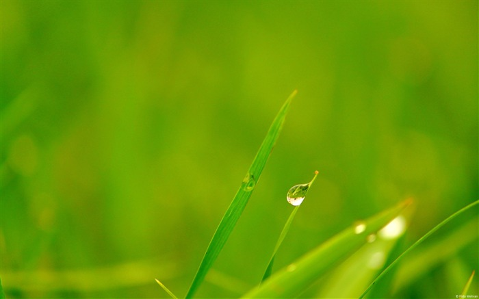 Grassland dewdrops-Windows 10 Desktop Wallpaper Views:1178