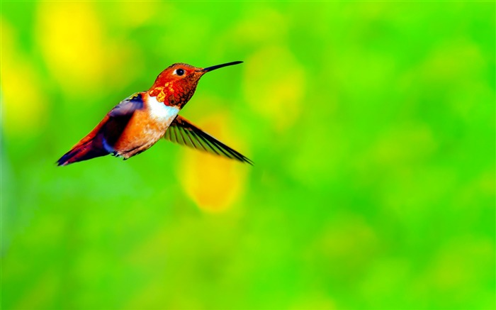 Spring Cute Hummingbird Photo Themed Wallpaper Views:13070