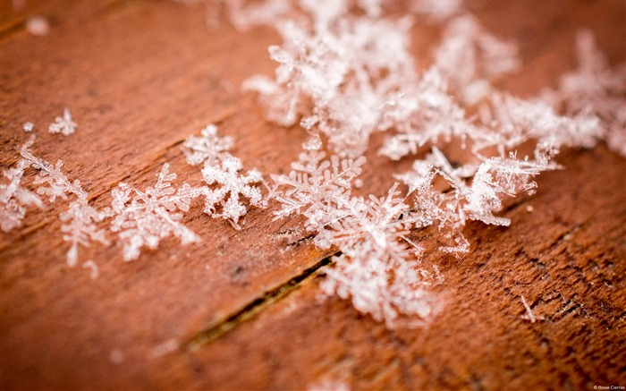Winter snowflake closeup-Windows 10 Desktop Wallpaper Views:1127