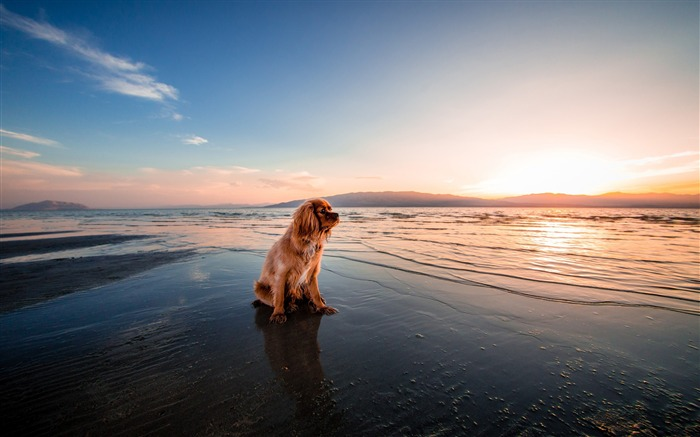 Dog dusk beach seashore-2017 Animal Wallpaper Views:761