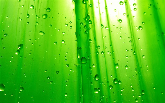 Green leaf rain drops-2017 High Quality Wallpaper Views:619