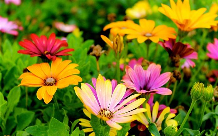 Naturaleza Flores Planta Fotografia Fondo De Pantalla Hd Lista De