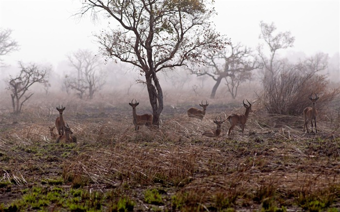 Pendjari national park-National Geographic Wallpaper Views:2276 Date:9/22/2017 1:27:20 AM