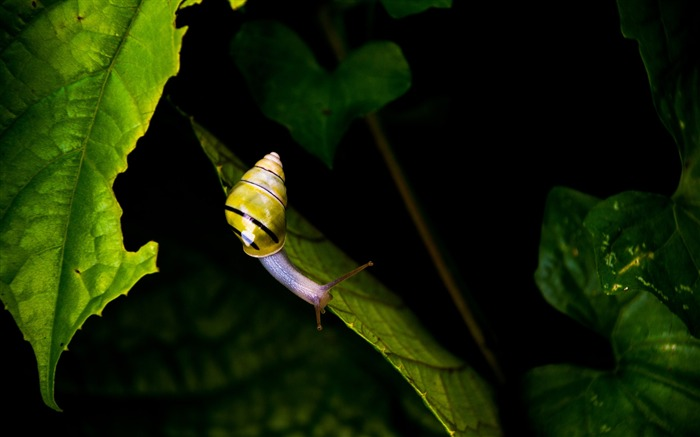 Striped snail on green leaf-2017 High Quality Wallpapers Views:258