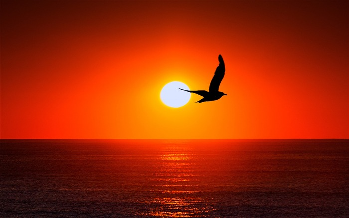 Bird silhouette sun Animal Wallpaper Views:1219