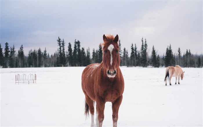 Horse winter snow forest Animal Wallpaper Views:954