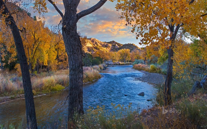 New Mexico Cottonwood trees in autumn 2017 Bing Wallpaper Views:378