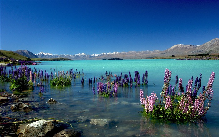 New Zealand Lake Tekapo Nature HD Wallpaper Views:6790 Date:10/27/2017 9:54:49 AM