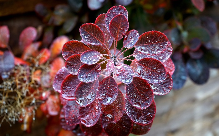 Dewdrops leaves plant Nature HD Wallpaper Views:446