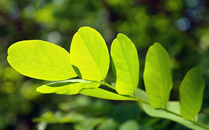 Green leaves sunshine macro Nature HD Wallpaper Views:406