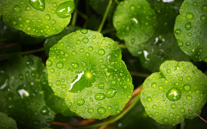 Plants leaves raindrops Nature HD Wallpaper Views:560