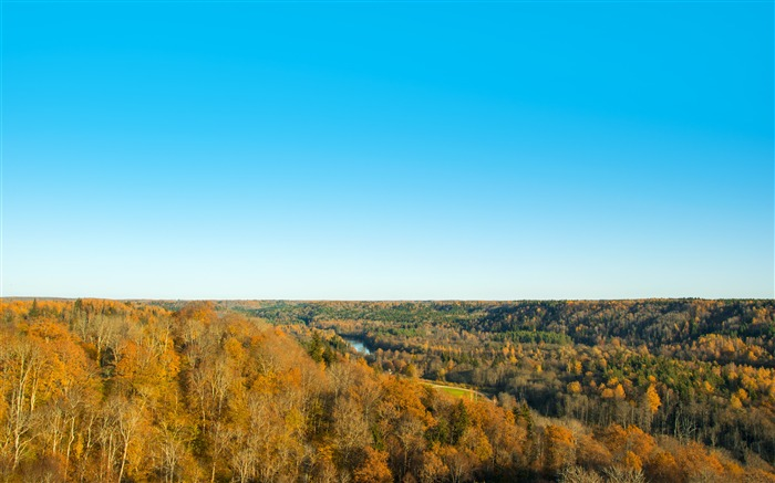 Golden Forest Blue Skyline 4K HD Photo Views:391