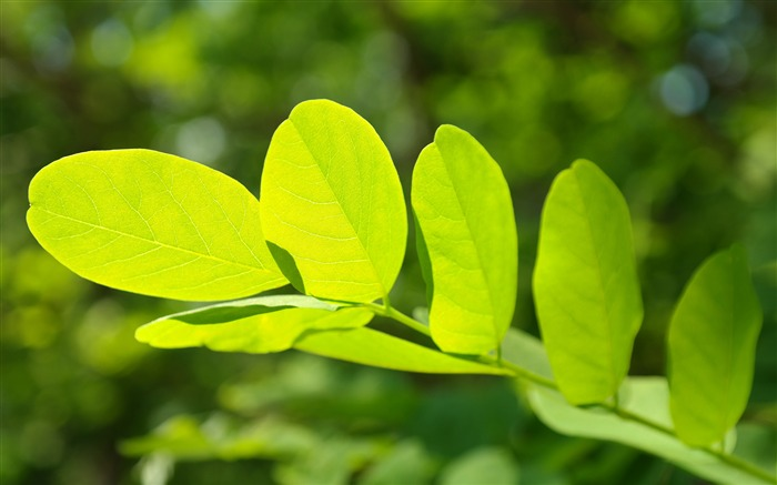 Green leaf sunshine Nature HD Wallpapers Views:1230