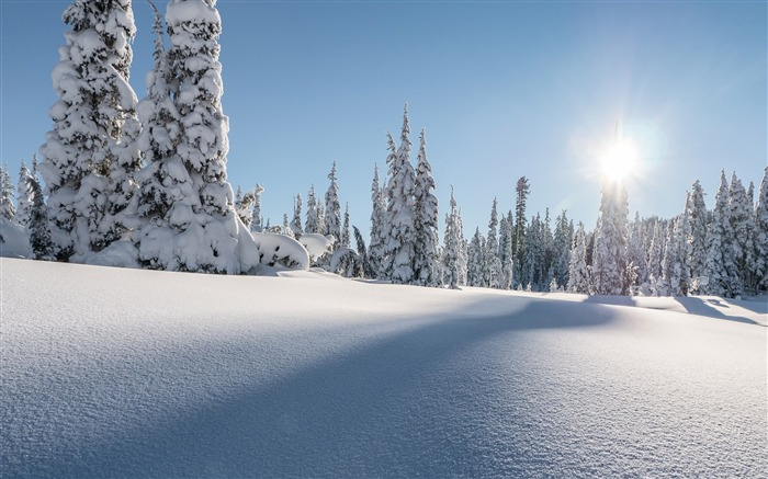 Washington strathcona park winter 4K HD Photo Views:362