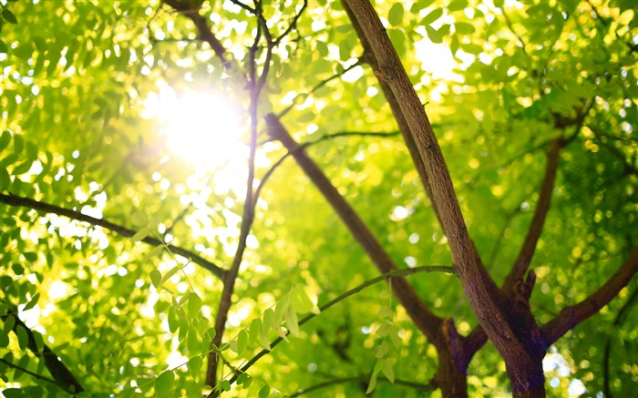 Forest tree green leaves sunlight 4K Views:589