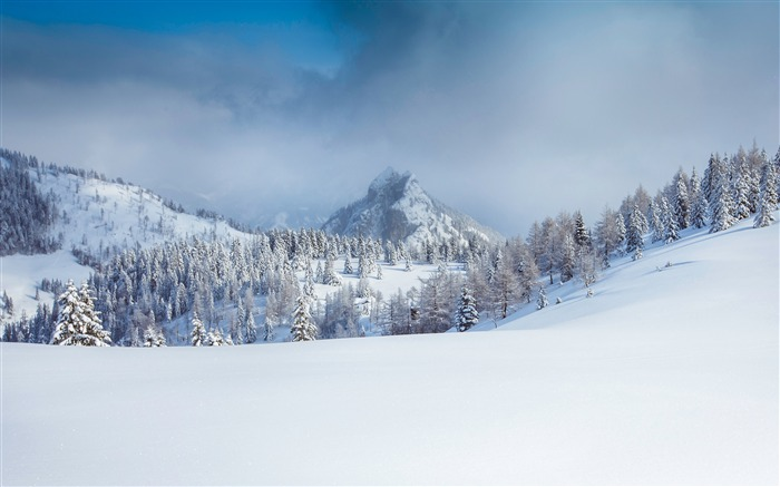 Forest winter alps snow mountain fog Views:838