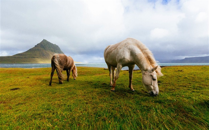New Zealand lakes grassland wild horses Views:336
